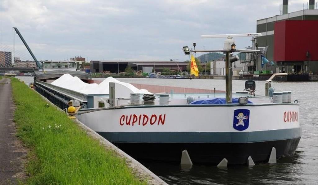 Cupidon Concordia Damen