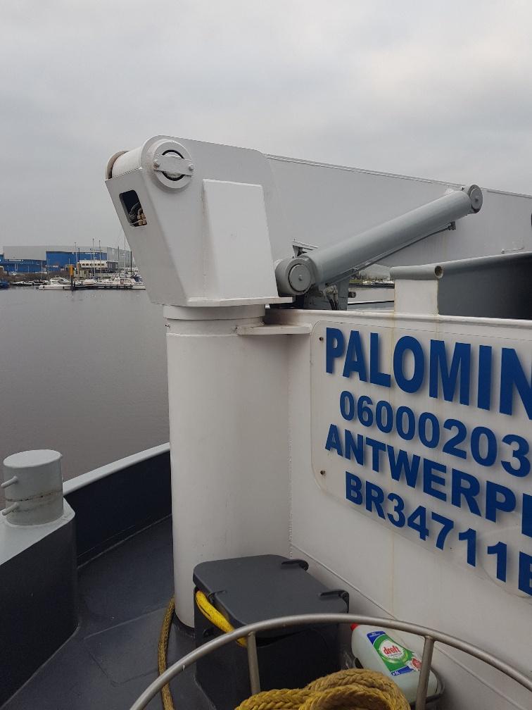 Palomino Concordia Damen